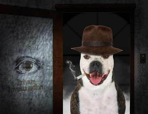 dog dressed as private investigator